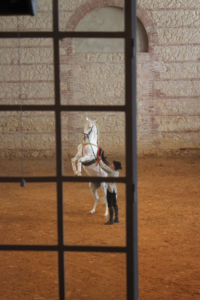 Andalucian horse